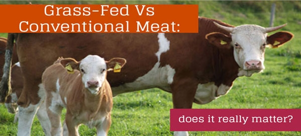 grass-fed-vs-conventional